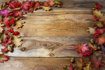 Thanksgiving background with berries, acorn and fall oak leaves