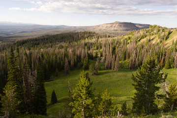 Table Mountain Wyoming Backcountry Forest