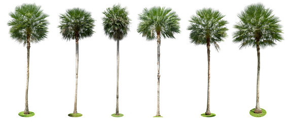 Wall Mural - Palm trees isolated collection on white background