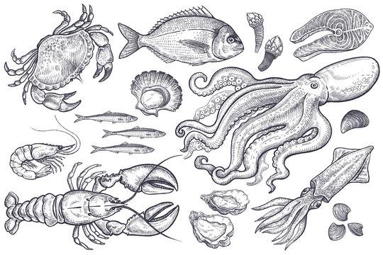 Set of sea food.