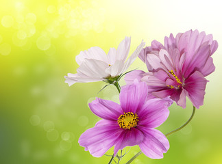 Beautiful flower background.Nature poster