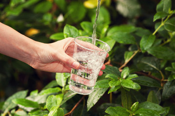 Drinking water. Young woman pouring a glass of water on a green leaves background.