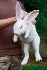 rabbit in hands of man