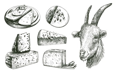 farming. goat breeding. livestock. cheesemaking.