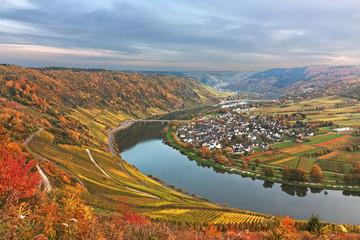 Moselschleife mit Weinbergen im Herbstlaub bei Traben-Tarbach, Ortsteil Wolf in Rheinland-Pfalz