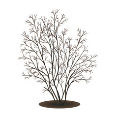 bush without leaves on white background
