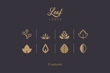 Golden minimal leaf and foliage icons collection