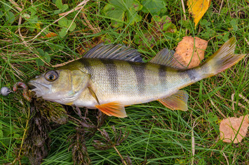 Perch on the grass