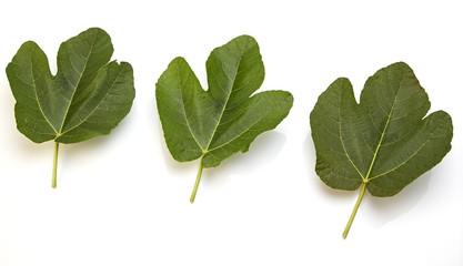 three fig leaf isolated