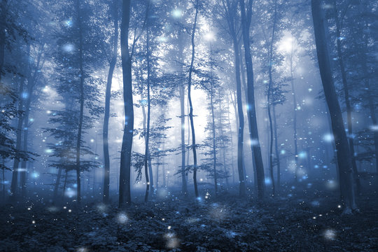Artistic blue color foggy forest tree fairytale landscape with abstract fireflies.