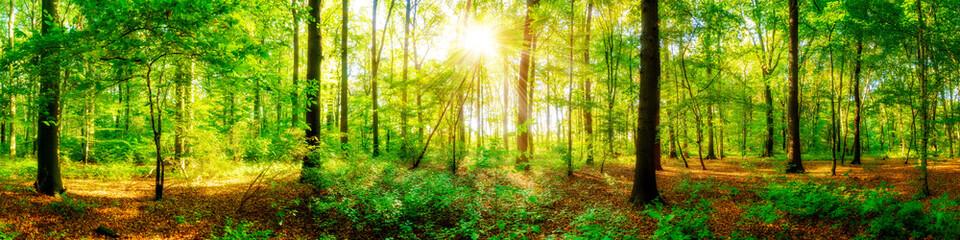 Fototapete - Wald Panorama mit Sonnenstrahlen im Herbst