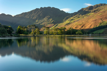 Row of Pine Trees reflecting in water at Buttermere in the English Lake District on an Autumn morning.