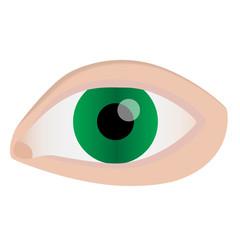 eye green realistic vector ellistration