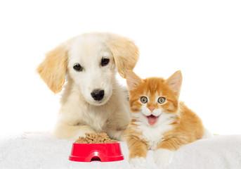Fototapete -  puppy and  kitten watching