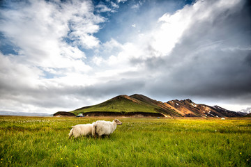 iceland nature concept