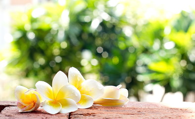 Photo Blinds Plumeria Blooming white Plumeria or Frangipani flowers on the brick floor