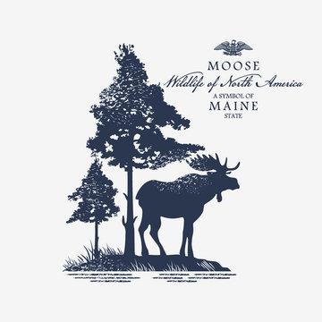 Лось, животное Северной Америки, символ штата Мэн