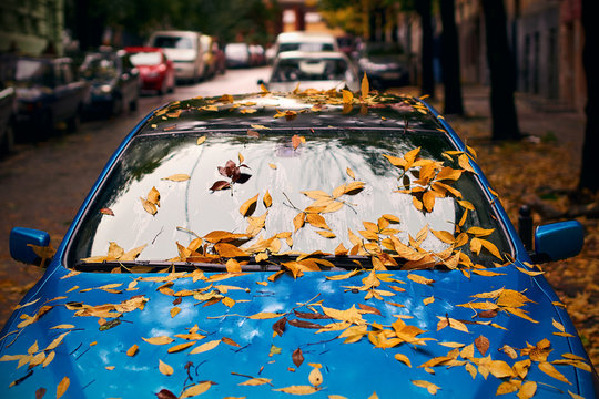 Yellow autumn leaves on a blue car