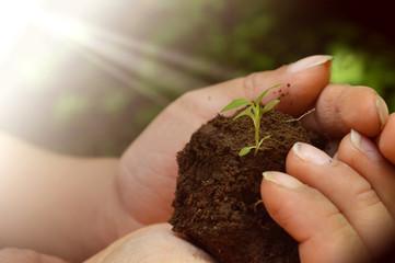 El crecimiento de una nueva empresa se inicia con mucho esfuerzo desde el nacimiento de una planta y va creciendo hasta ser un árbol grande.