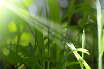 El crecimiento de una nueva empresa se inicia con mucho esfuerzo desde el nacimiento de una planta y va creciendo hasta ser un árbol grande