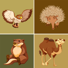 Different types of wild animal on brown background