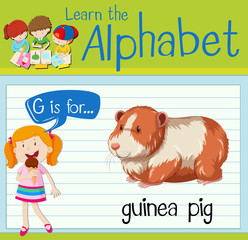 Flashcard letter G is for guinea pig