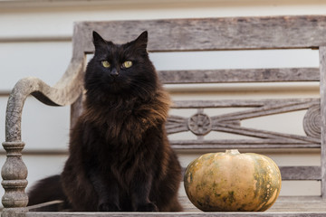 Black cat with pumpkin