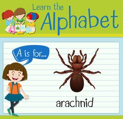 Flashcard letter A is for arachnid