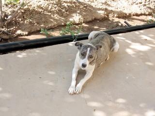 Uzbekistan Mayskiy dog 2007