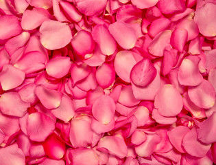 Red pink rose petal background