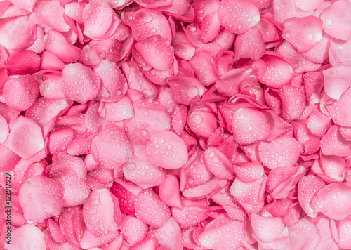 how to make rose petal water