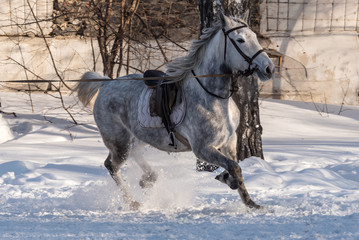 horse training workout winter