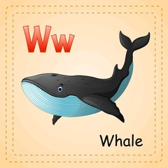 Animals alphabet: W is for Whale