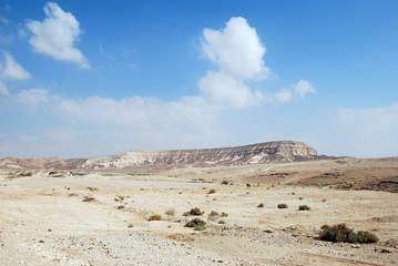 Prickly Beauty in desert.