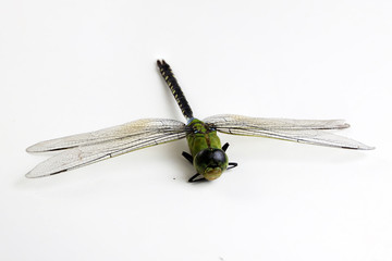 Dragonfly green and black color