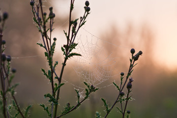 Spider's web covered with dew on the grass in morning sunSpider's web covered with dew on the grass in morning sun