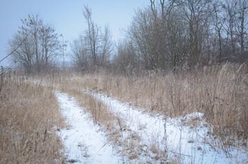Keuken foto achterwand Bos in mist frozen grass and ground frost in winter background