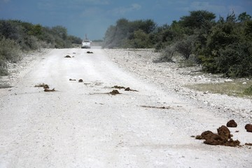 Elephant heap on the gravel road in Etosha National Park, Namibia Africa
