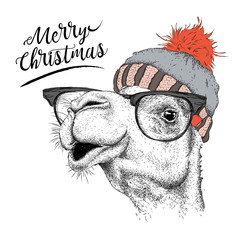 Christmas card with camel in winter hat. Merry Christmas lettering design. Vector illustration