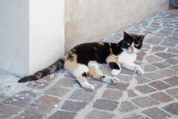 Gatto sul pavimento mattonato