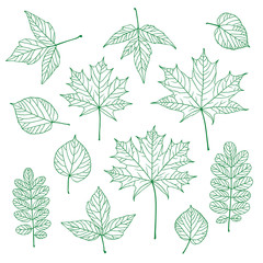 Set of outline vector leaves. Maple, linden, acacia, acer
