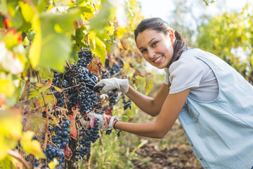 Brunette girl using scissors to cut grapes