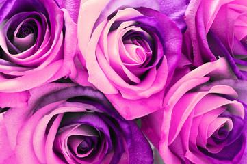 Fototapete - Pink rose bouquet