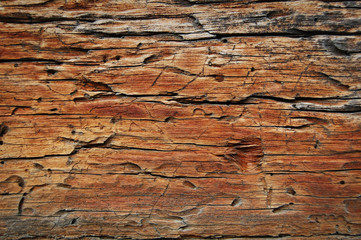 wood eaten by worms, wooden background and texture