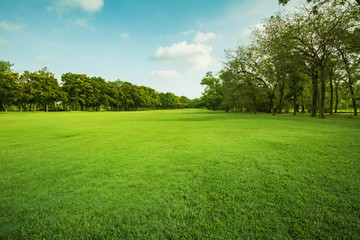 Canvas Prints Meadow green grass field in public park