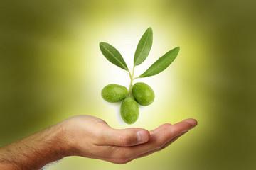 Fototapete - Tre olive verdi bontà e salute