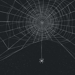 Halloween background with spider and web