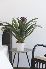 Green plants decorating a room,living room