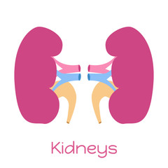 Kidneys illustration in flat style. Viscera icon, internal organ