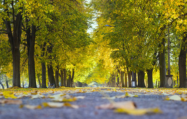 Beautiful autumn city park with trees and benches. Landscape. Walkway